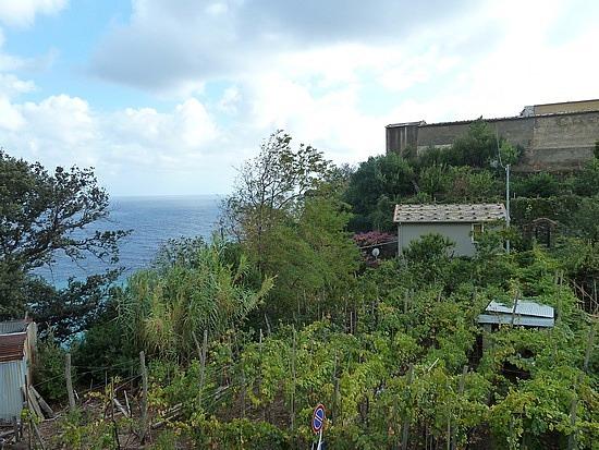 Vineyards beside our hostel