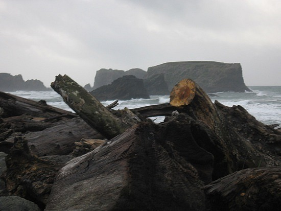 Moe logs on beaches