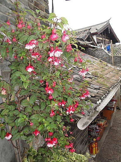Flowers & roof - being photographer