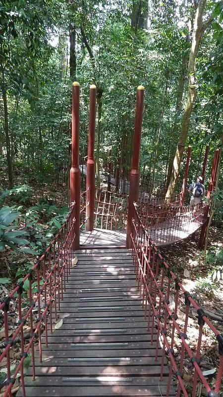Rainforest bridge walk