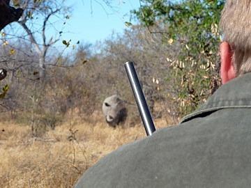 Ranger Sean with the gun & rhino looking at us