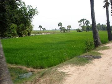 Brilliant green paddy fields