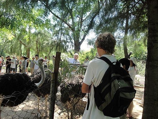 Feeding an ostrich
