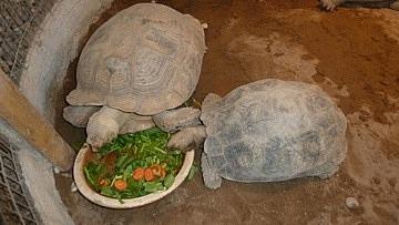 Turtles having lunch