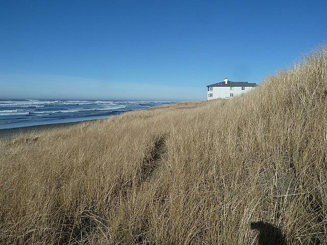 Long dune grass