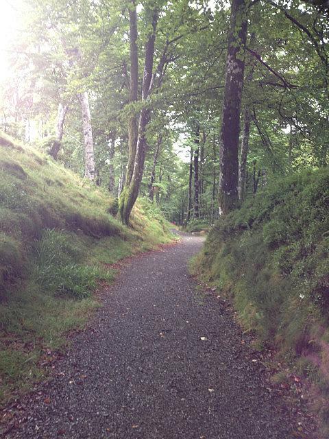 Beuatiful pathways