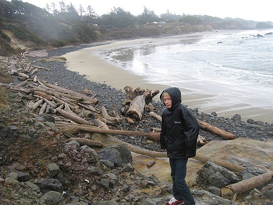 Just a few logs on the beach!