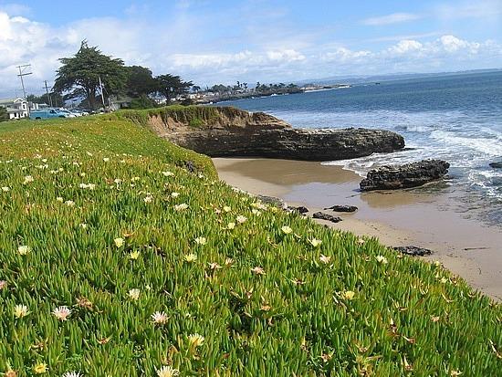 Coastline flowers