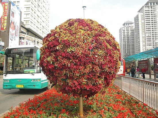Topiary tree in middle of bus lanes