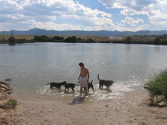 Adam & the dogs at Chatfield Dam