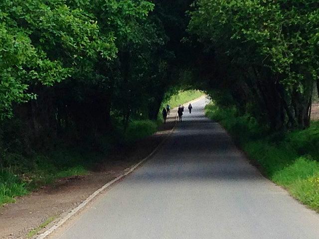Gorgeous tree tunnel