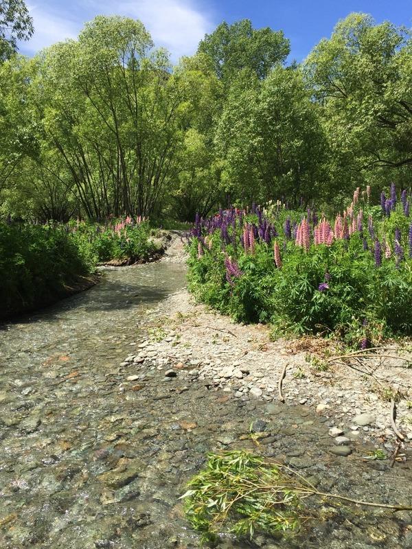 Rushing streams & flowers