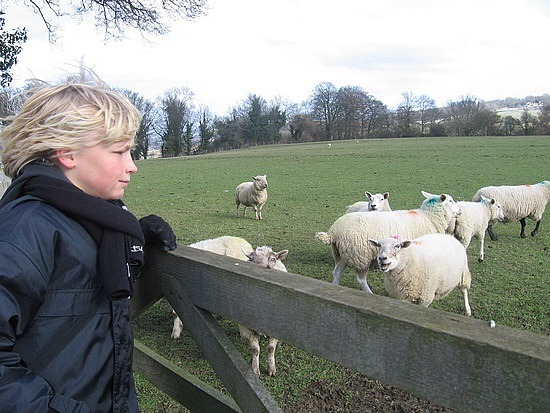 Talking to the sheep