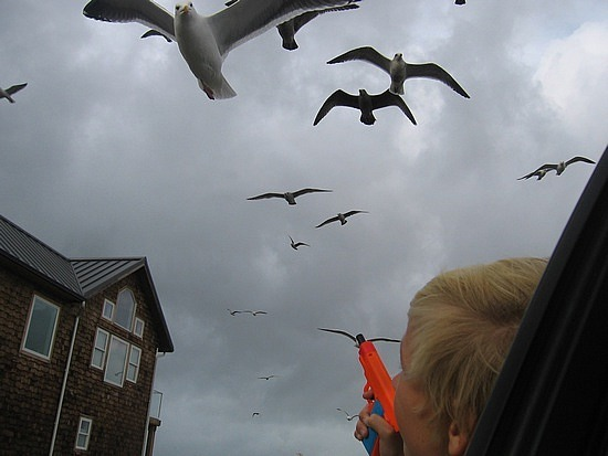 Nath being pursued by seagulls