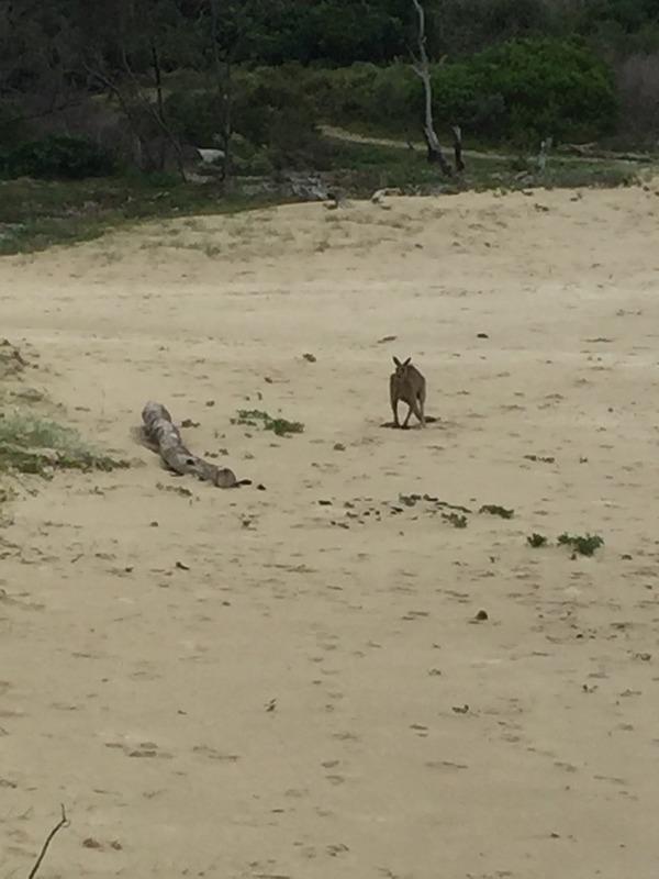 Kanga on the beach