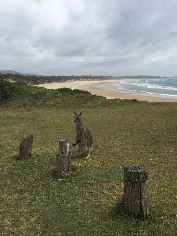 Kangaroo Haven