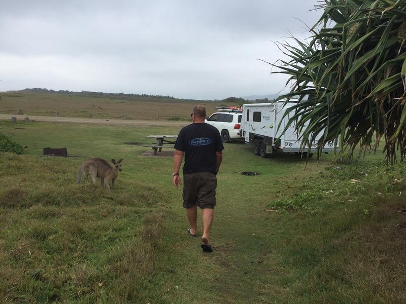 Brad. Kangaroo and campsite