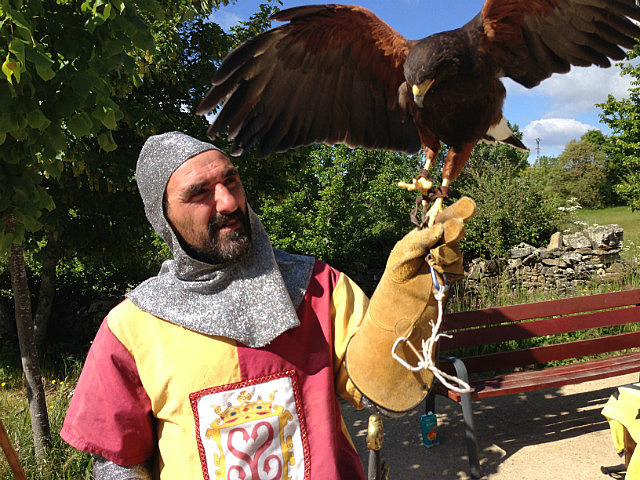 Medieval man and his falcon