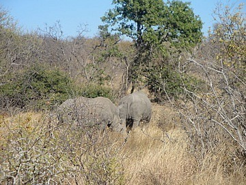 The 2 Rhino we walked to