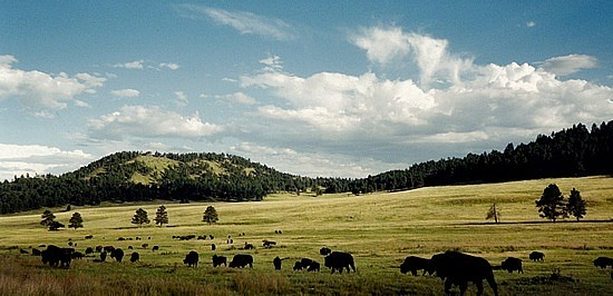 Praries with bison