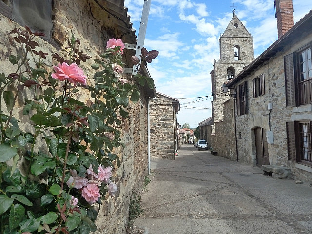 Flowers in the village of Rabanal