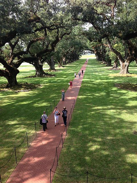400 year old oak trees