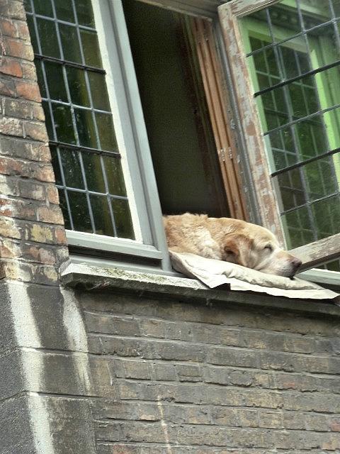 Dog sleeping in window by canal