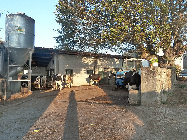 Galician Dairy