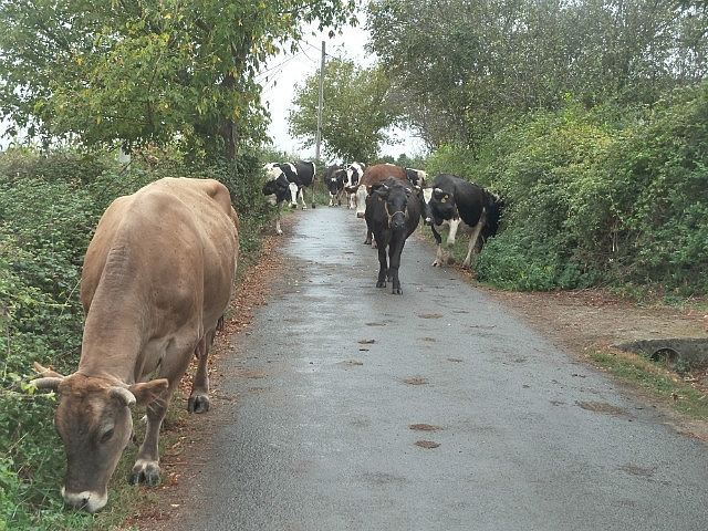 Lots of smells and poo in Galician villages