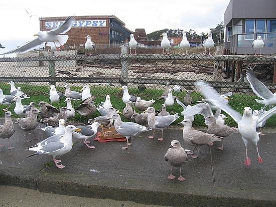 King Size seagulls