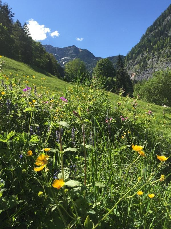 Alpine wildflowers and beauty