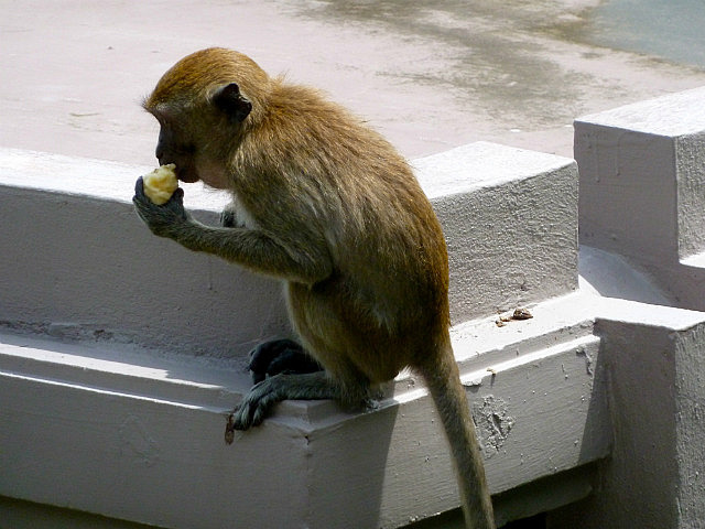 Monkey on a ledge