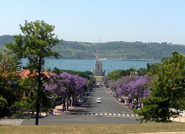 Avenue of Jacaranda trees