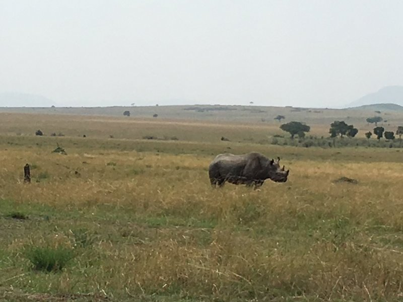 Lonely rhino - another of the big five spotted