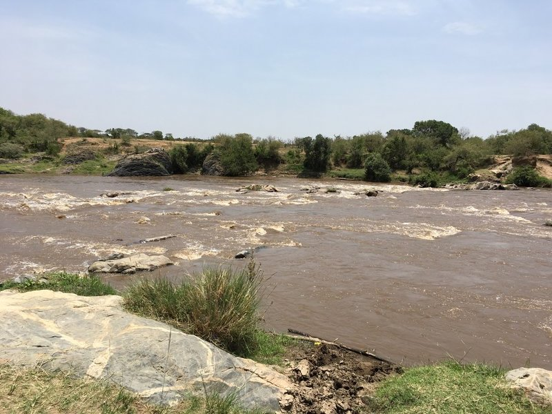 Picture of Mara river where migration can occur