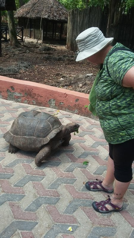Kellie and the tortoise