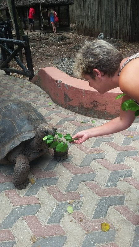 Feeding the tortoise
