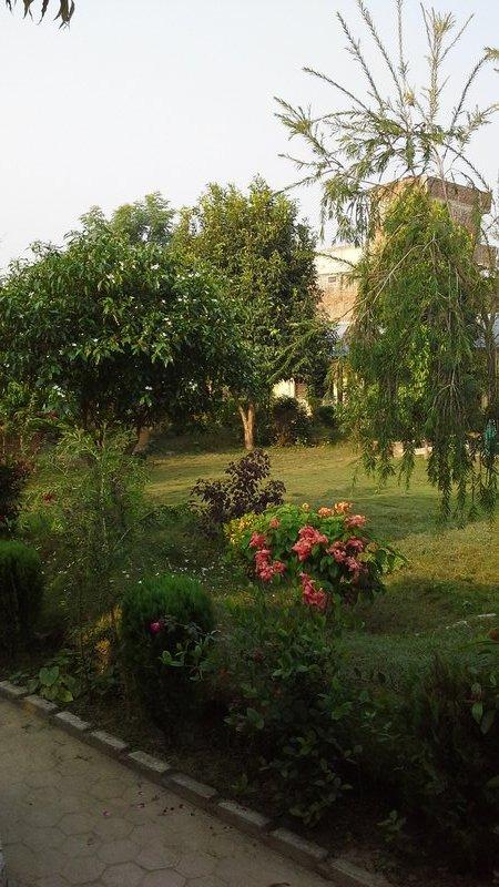 Mrs. B's garden