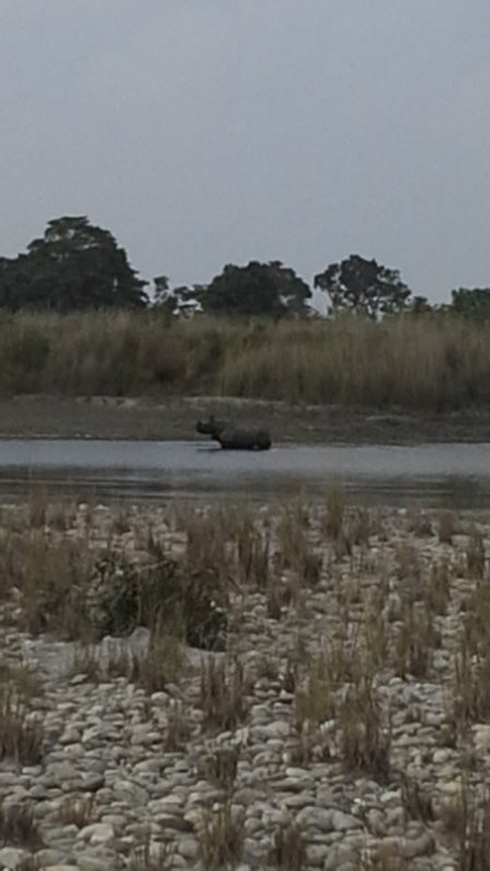 Rhino in the river