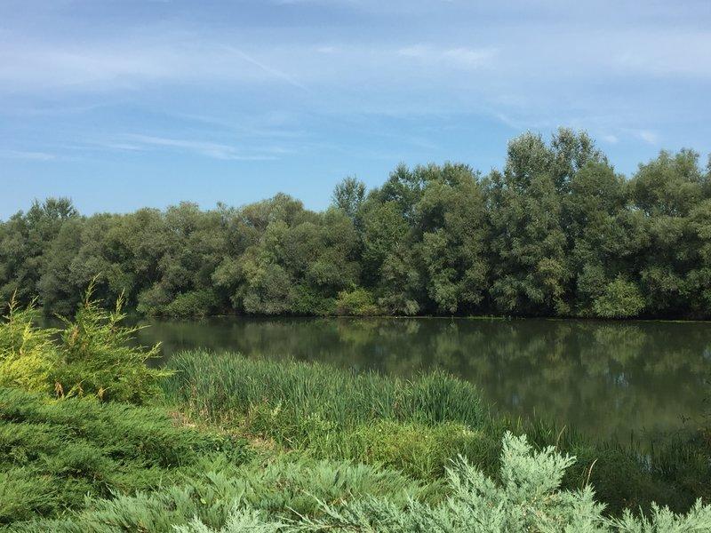 Bodrog river