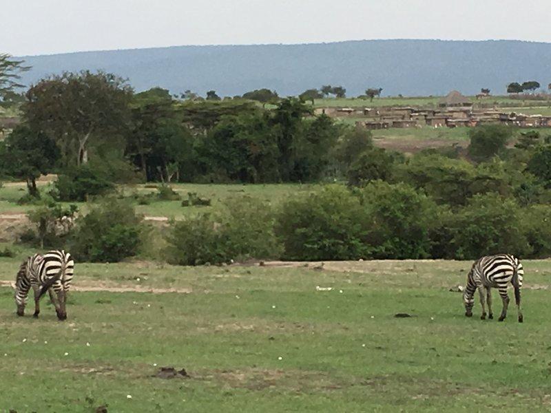 More grazing zeebras