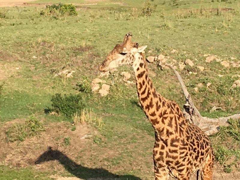 Bye bye giraffe