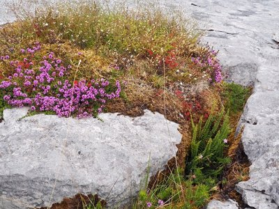 Color on The Burren