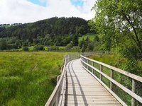 The boardwalk around the lower lake at Glendalough