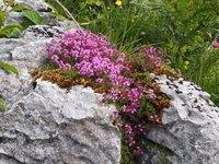 Still more wild flowers