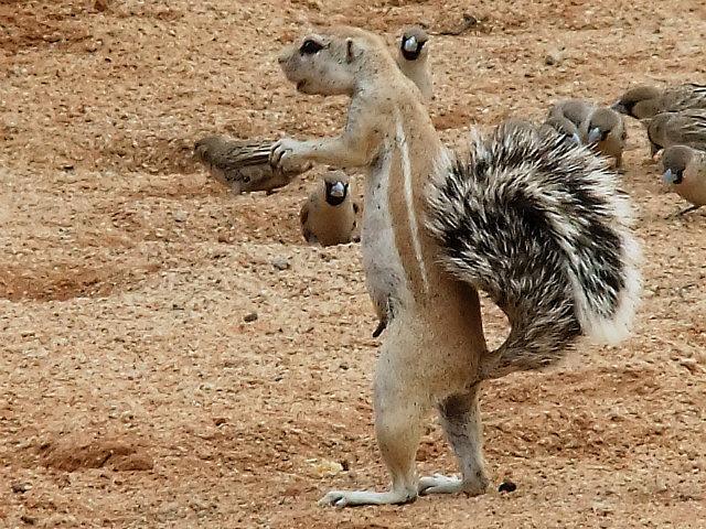 Ground Squirrel Solitaire