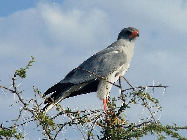 Bird Etosha