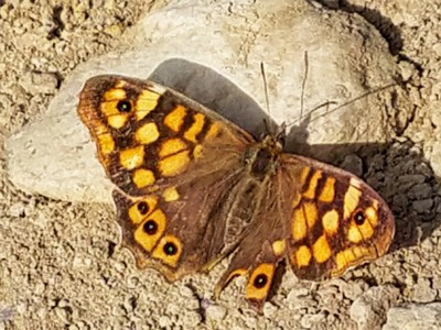 Very little wildlife in France or Spain - seeing a butterfly is exciting