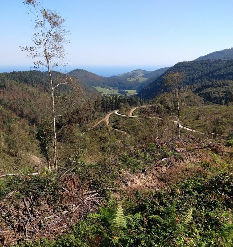 Looking back down a steep climb - plenty of logging