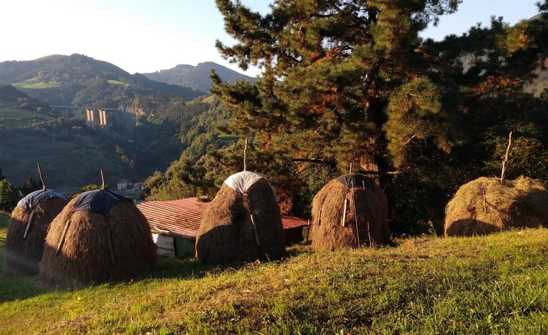 Old style haystacks - the only ones we've seen of this type